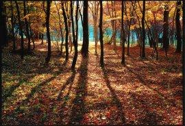 県民の森:写真