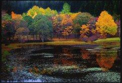 県民の森:画像