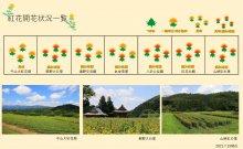 21.7.15 紅花畑:画像