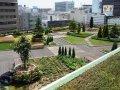 建築物緑化助成事業を活用して屋上緑化:画像