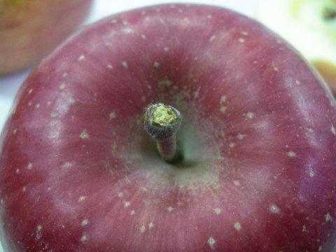 林檎本来のパワーを活かす栽培方法:画像