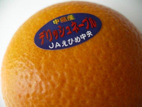 オレンジ好きにはたまらないデリッシュネーブル:画像