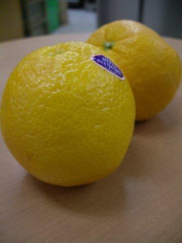 一般的にオレンジといえば、このバレンシアオレンジ・・・:画像