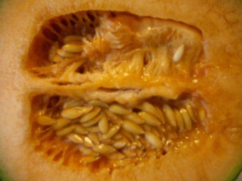 クインシーメロンのオレンジ色はカロテンです。:画像