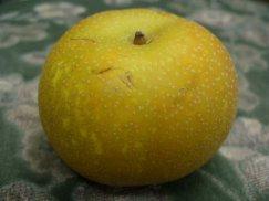 山形県庄内産《刈屋梨》後味の良い自然な甘さ:画像