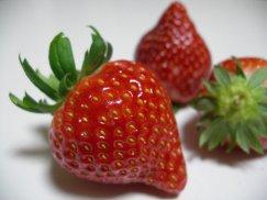 いちご食べ比べbox/大粒いちご5種夢の競演:画像