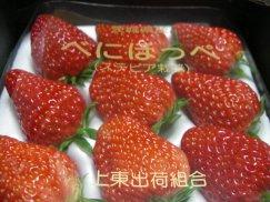 静岡県/茨城県産《べにほっぺ》香り高き大粒苺:画像