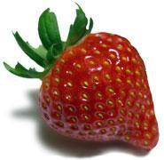 フルッティア厳選《大粒いちご》5種類の夢の競演です!:画像