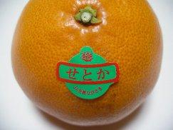 長崎県産《せとか》幻の高級柑橘:画像
