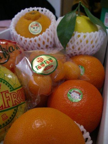 フルッティア厳選《柑橘》本場かんきつ8種夢の競演です!:画像