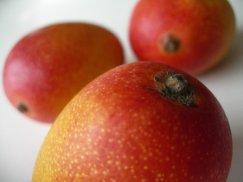 宮崎県産《完熟ミニマンゴー》小さくても濃厚な味:画像