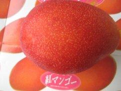 沖縄県産《紅マンゴ》元祖国産マンゴー:画像