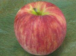 山形県天童産《つがる》早生種 夏のりんご:画像