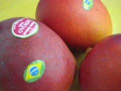 ブラジル産《アップルマンゴ》トミーアトキンス種:画像