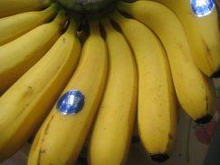 台湾産《台湾バナナ》高地栽培:画像