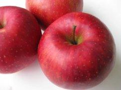 山形県産《陽光ようこう》秋のりんご:画像