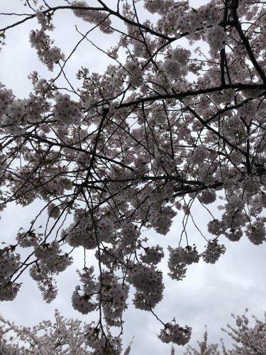 春の色とりどり:画像