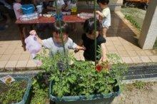 🍆🍅野菜を育てたよ!🥒🥕:画像