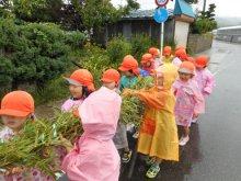 雨の中、笹竹運びに大苦戦!!(豊田児童センターの日記):画像