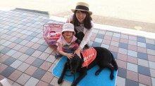 「盲導犬ふれあい募金活動」に参加してきました!:画像