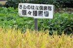【山形の伝説の米「さわのはな」原々種の刈り取り】:画像