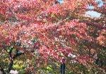 【今はもう秋♪】:画像