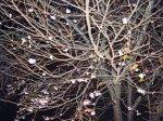 【晩秋の夜桜】:画像