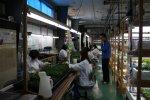 【農業×テクノロジー (株)環境彩エン】:画像