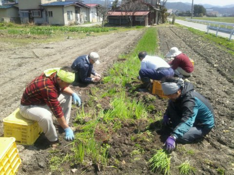 4/25(木) 福幸ファームさん農作業支援:画像