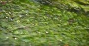 水のあつまるまちあるき(H28.7.29):画像