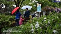 白つつじ祭りオープニングイベント(H29.5.13)  :画像