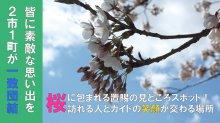桜の下で華麗な舞を披露~ 置賜さくら回廊「花咲きイベン..:画像