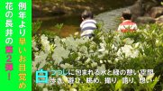 平成30年度 白つつじまつり開園式(5.12):画像