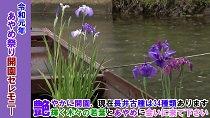 長井あやめまつりオープニングセレモニー(令和元年6月15日):画像