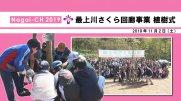 【長井市】最上川さくら回廊事業 植樹式(令和元年11月2日) :画像