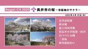 【長井市】長井市の桜〜市街地のサクラ〜(令和2年4月16日):画像