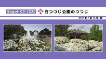 【長井市】白つつじ公園のつつじ(令和2年5月18日):画像