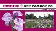 【長井市】あやめ公園(令和2年6月28日):画像