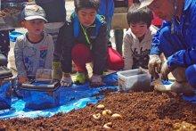 ☆親子チャレンジ教室 カブト虫を育てる教室2018     ..:画像