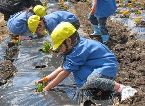 【花いっぱいになぁれ!〜2010フラワーボランティア】:画像