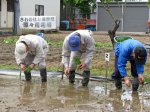 【幻のお米さわのはな〜種子栽培の為の田植えを行いました】:画像