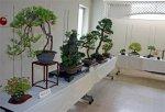 【まちの楽校本町館で盆栽展をやっています】:画像