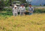 【伝説のお米さわのはなの原々種刈り取りが行われました】:画像