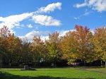 【白つつじ公園の木々も綺麗に紅葉しています】:画像