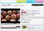 【動画アップしました〜寺泉の秋トマト】:画像