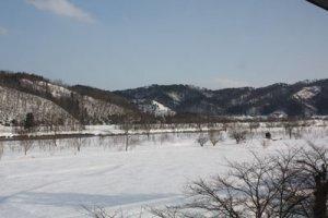 【春の予感】:画像