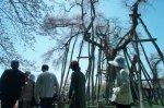 【置賜さくら回廊 東北の元気復興祭&伊佐沢念佛踊り】:画像