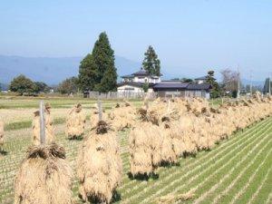 【長井の秋を探しに〜ぶらり♪】:画像