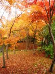 【晩秋のやませ蔵】:画像