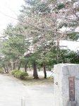 【桜、開花宣言!&さくら通信+゜*】:画像